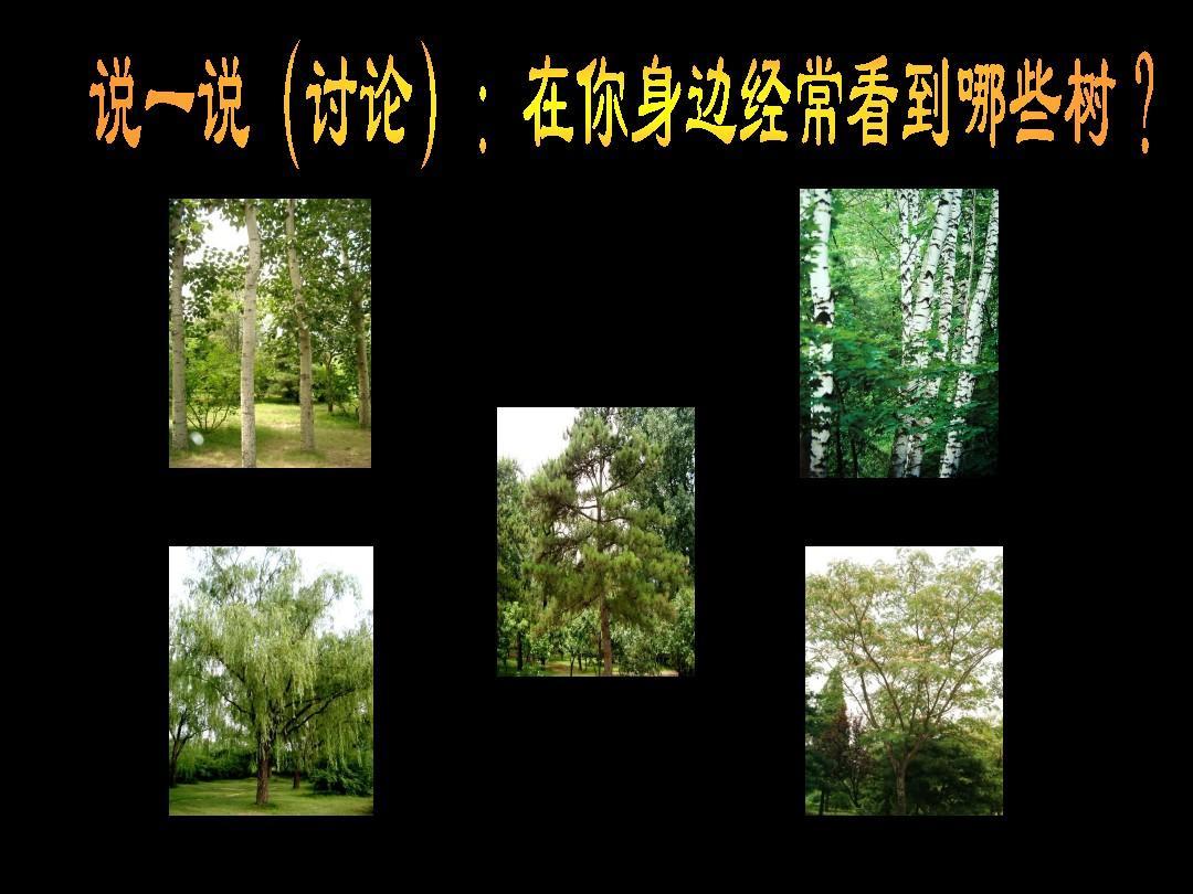 《认识身边的树》 (人美版 二年级下册美术ppt)图片