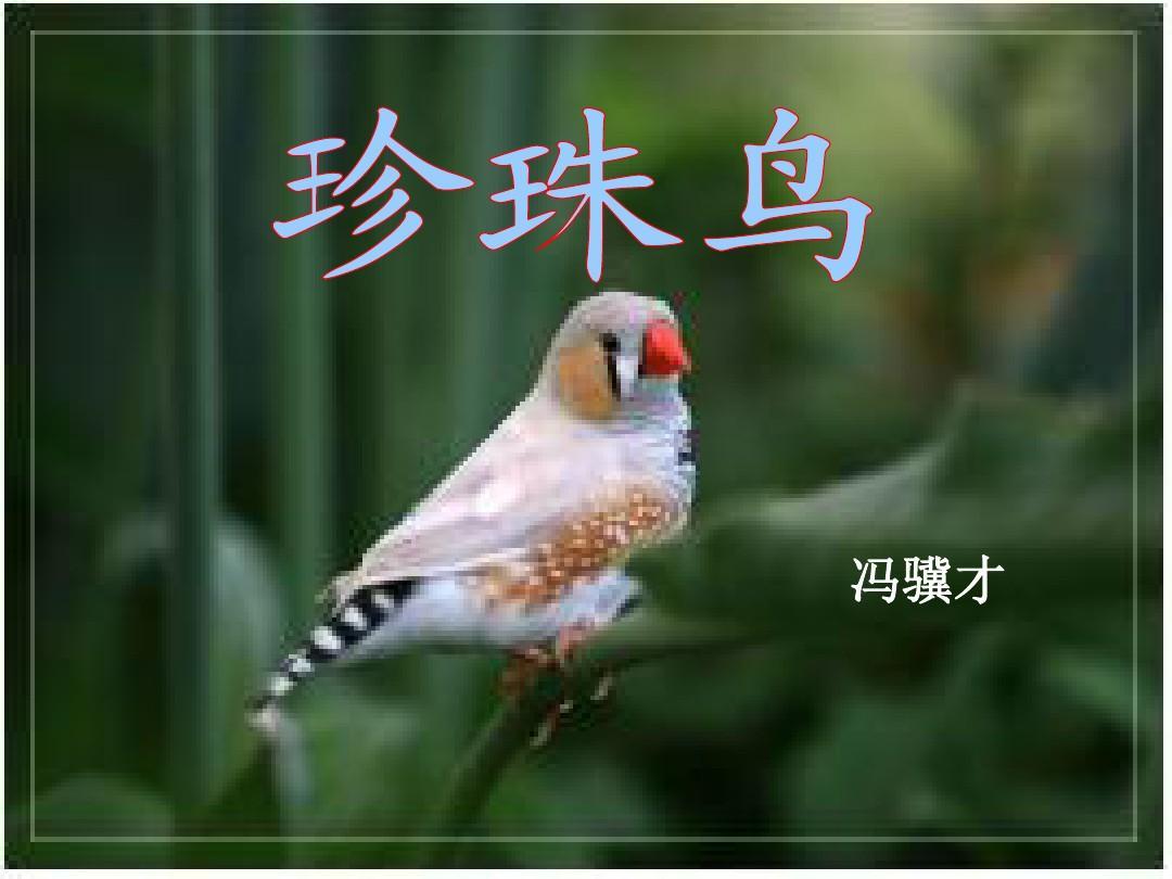 最新语文版人教五上册年级第16课《珍珠鸟》公共政策课件学图片