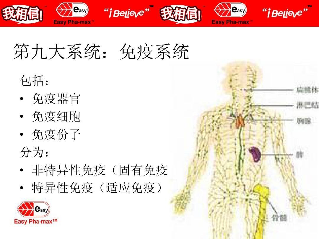 人体性器呈_人体八大系统