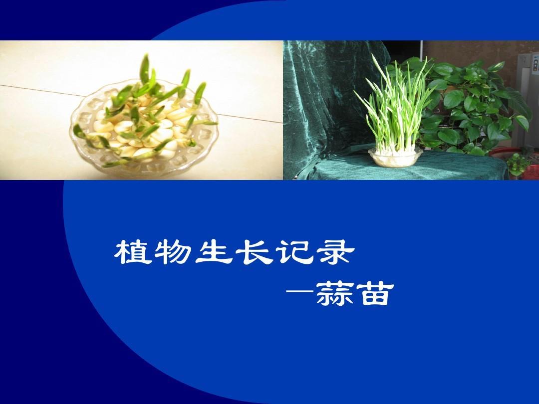 植物生长素的发现 植物生长调节剂 植物生长环境 植物生长过程 植物图片
