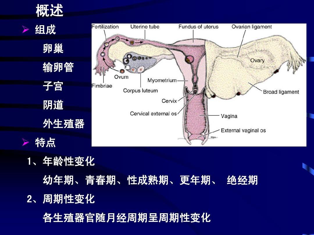 各年令女性生殖器图_19-女性生殖_word文档在线阅读与下载_无忧文档