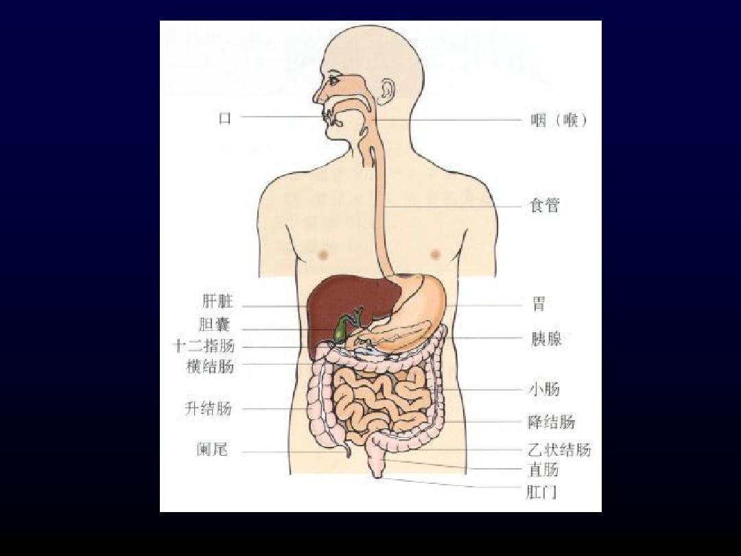消化系统有哪些疾病?(介绍详细)图片
