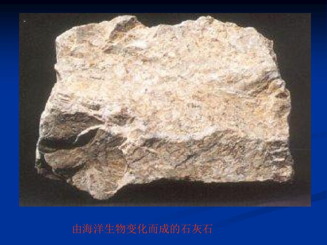 由海洋生物变化而成的石灰石