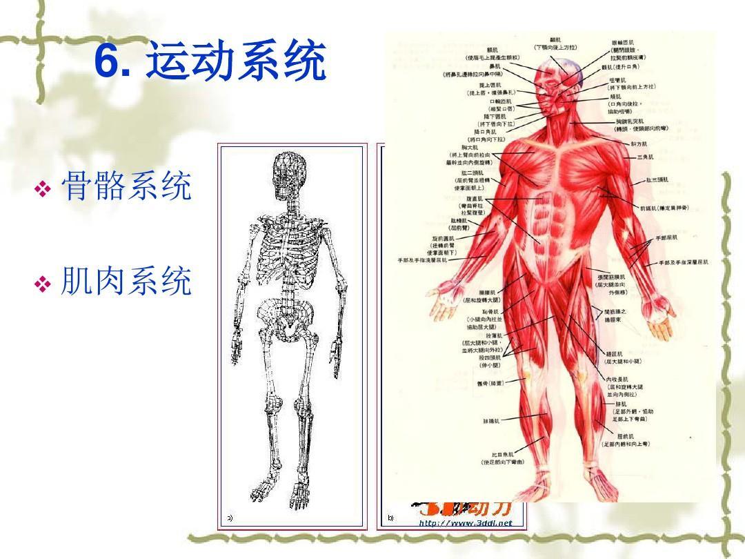 人体结构和功能_人体结构与生理功能ppt