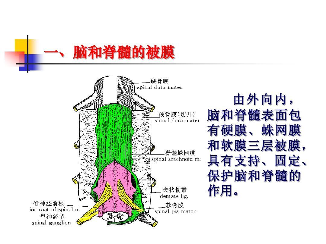 抽脑脊液疼吗_脑被膜血管和脑脊液循环ppt