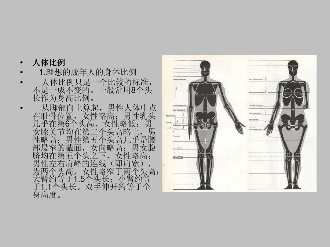 艺术用人体完整比例骨骼1