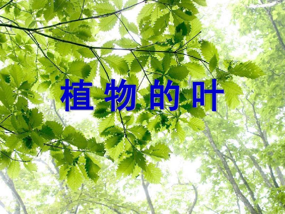 1-5《植物的叶》PPT课件