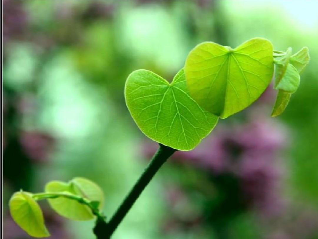 做一片最美的叶子课件ppt图片