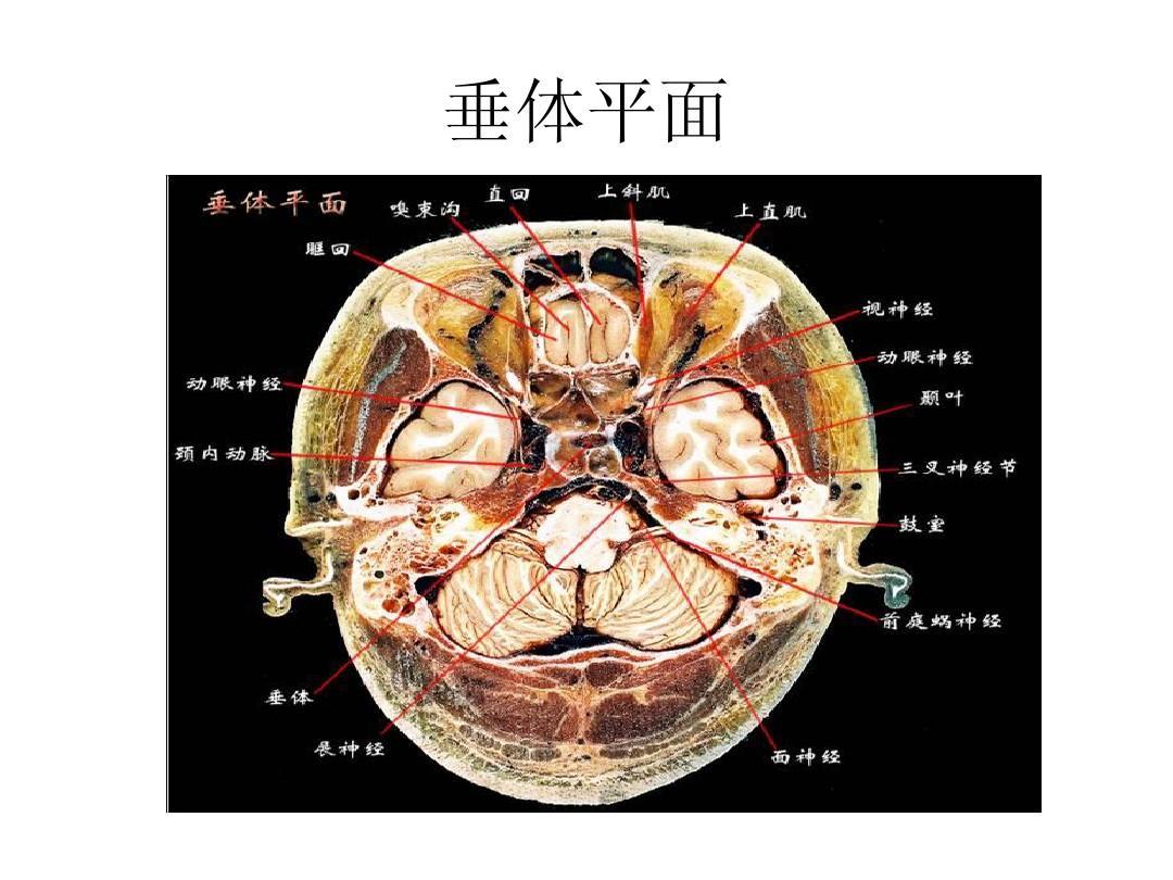 大脑结构_大脑结构图图例ppt