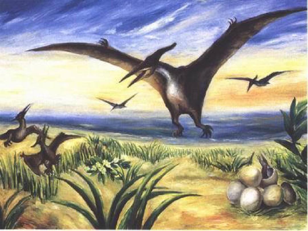 无忧文档 所有分类 小学教育 语文 三年级语文 恐龙最新ppt  第10页图片