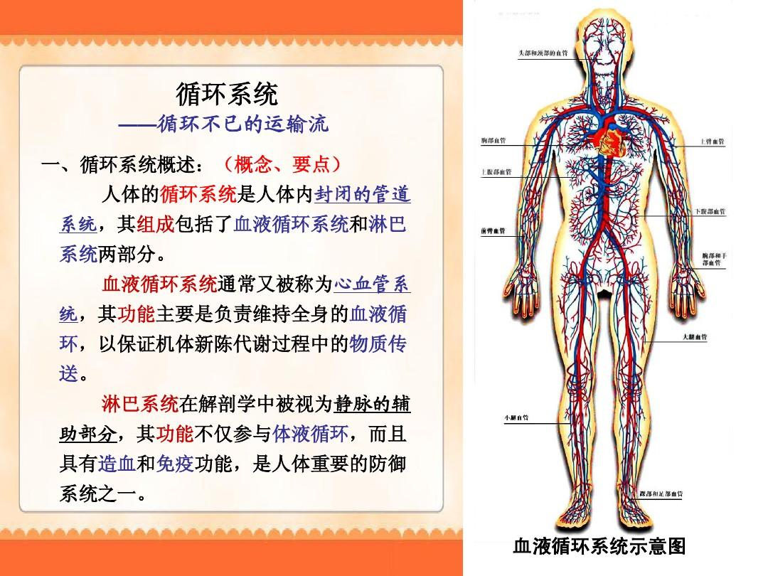 人体系统_血液系统疾病概述 (1)