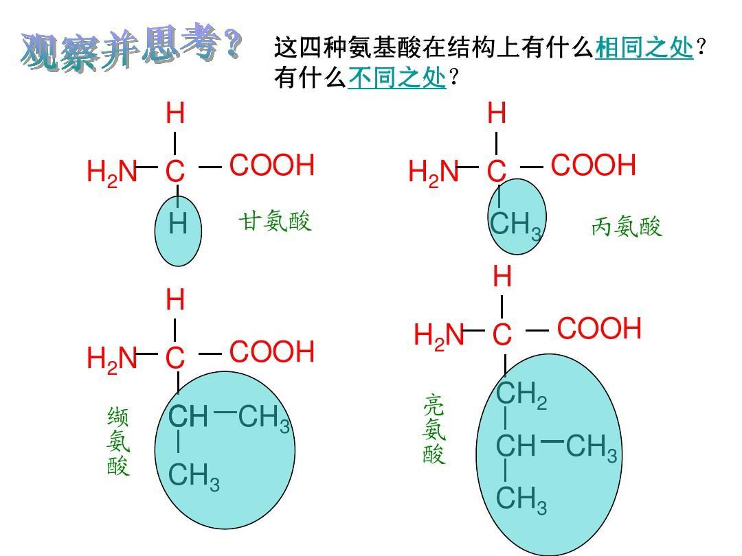 种类氨基酸决定结构 20种氨基酸结构 脱氧核糖核酸结构式图片
