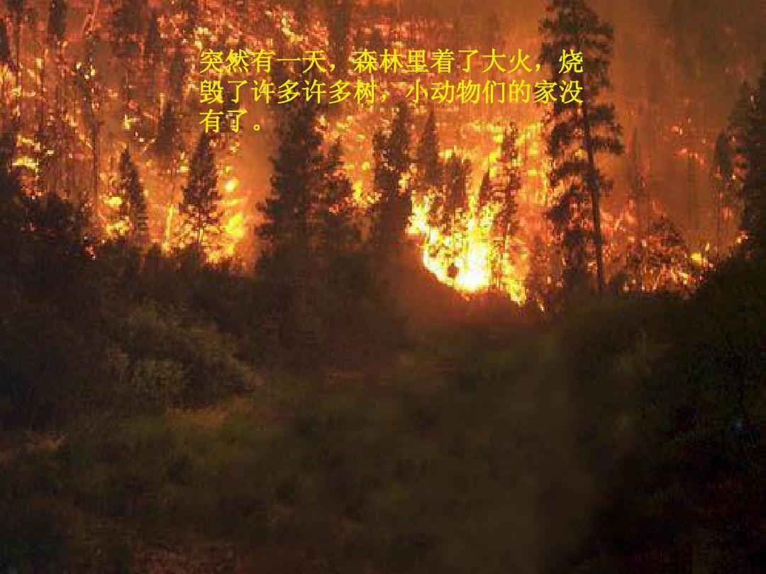 怀孕梦见大火烧树