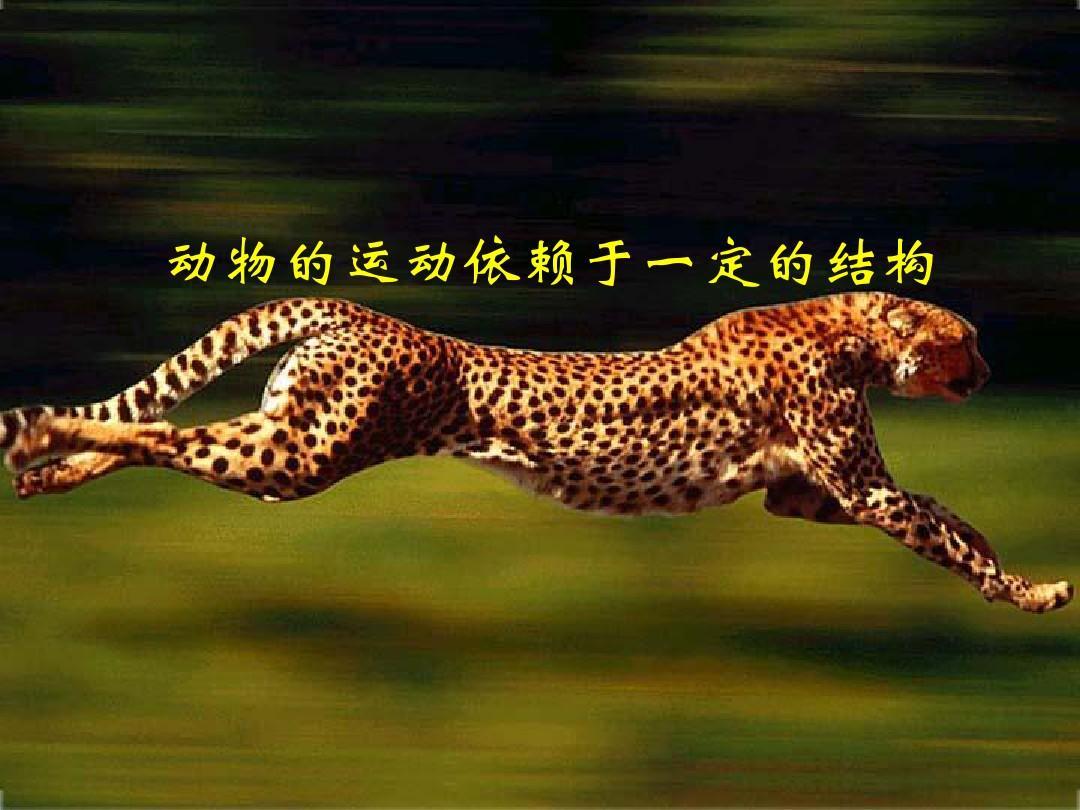 17.2动物的运动依赖于一定的结构 课件1(苏教版八年级上册)ppt图片