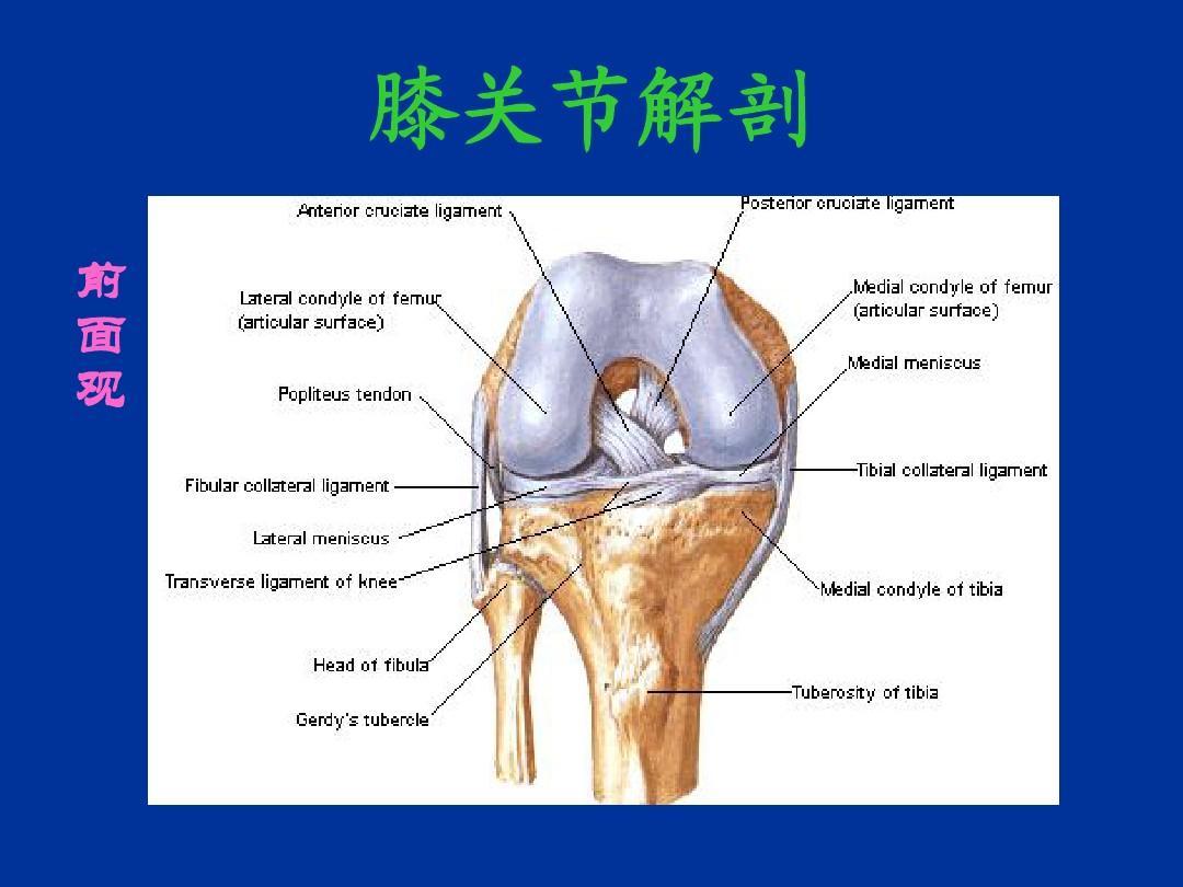 膝关节的mri备课ppt江苏教案一小学年级诊断下册图片