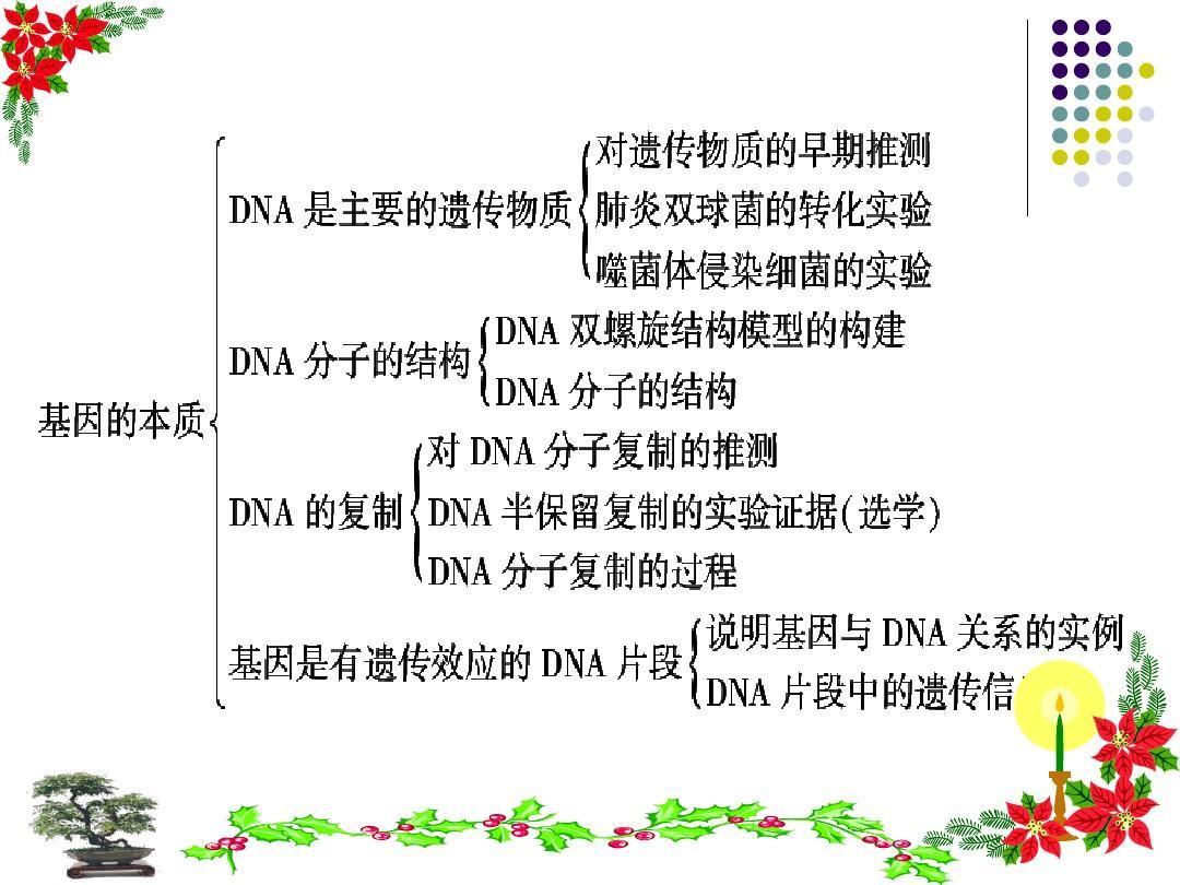 《答案的基因》v答案教案课件ppt江雪幼儿园本质图片