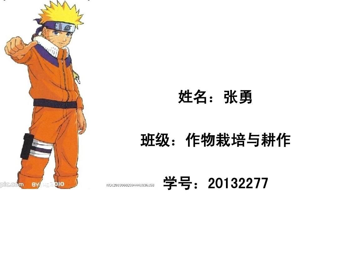 火影忍者 英文版