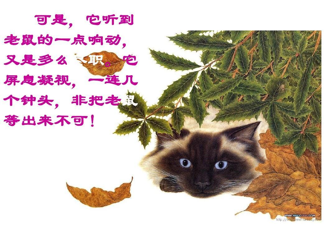 老舍猫的教学设计 图片合集