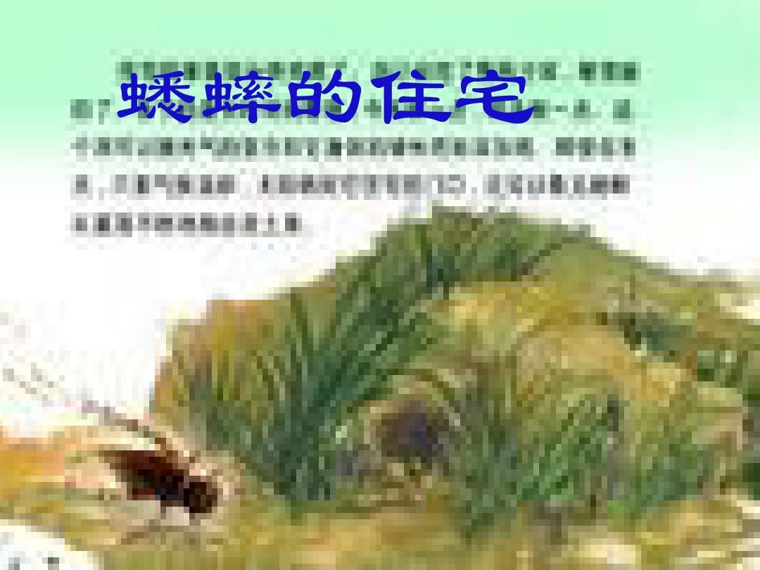 蟋蟀的住宅2.ppt