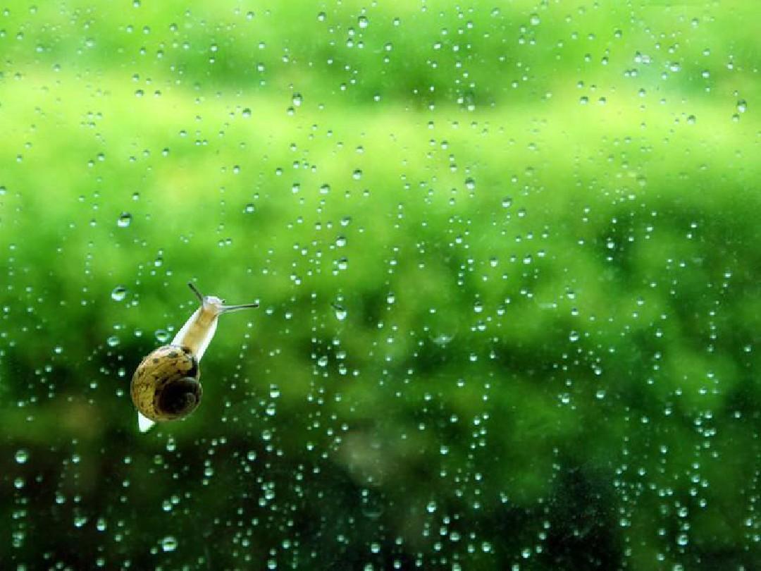 小雨沙沙沙課件jueduippt圖片