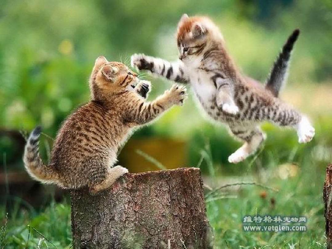 猫说文言文