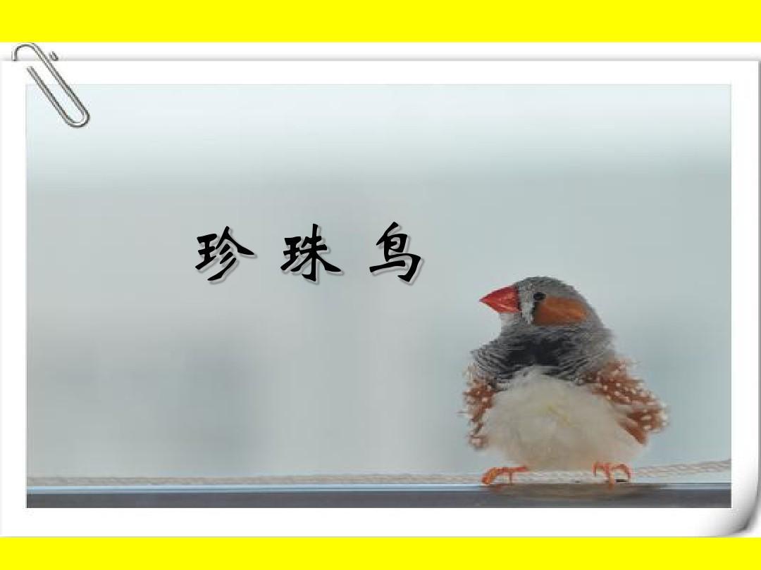 S版下册五年级语文窗户《7珍珠鸟》观摩课示多彩的小学说课稿图片