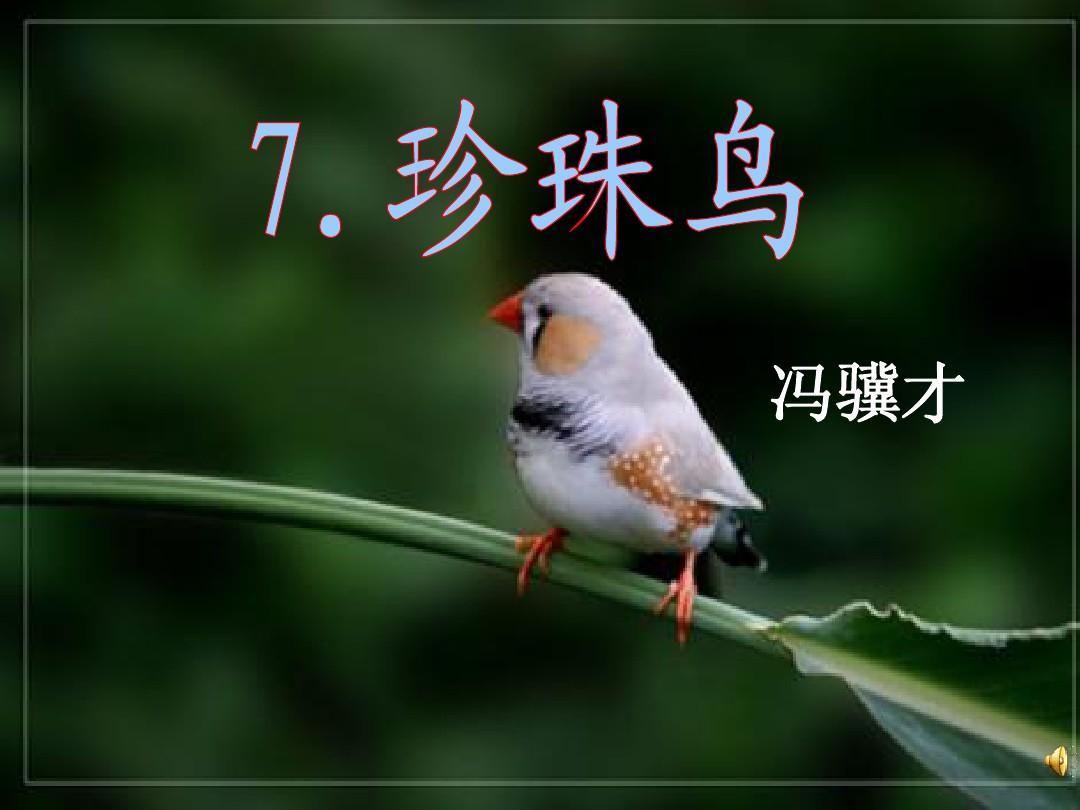 《珍珠鸟》s版五年级课件教案ppt秋天是意图v年级下册图片