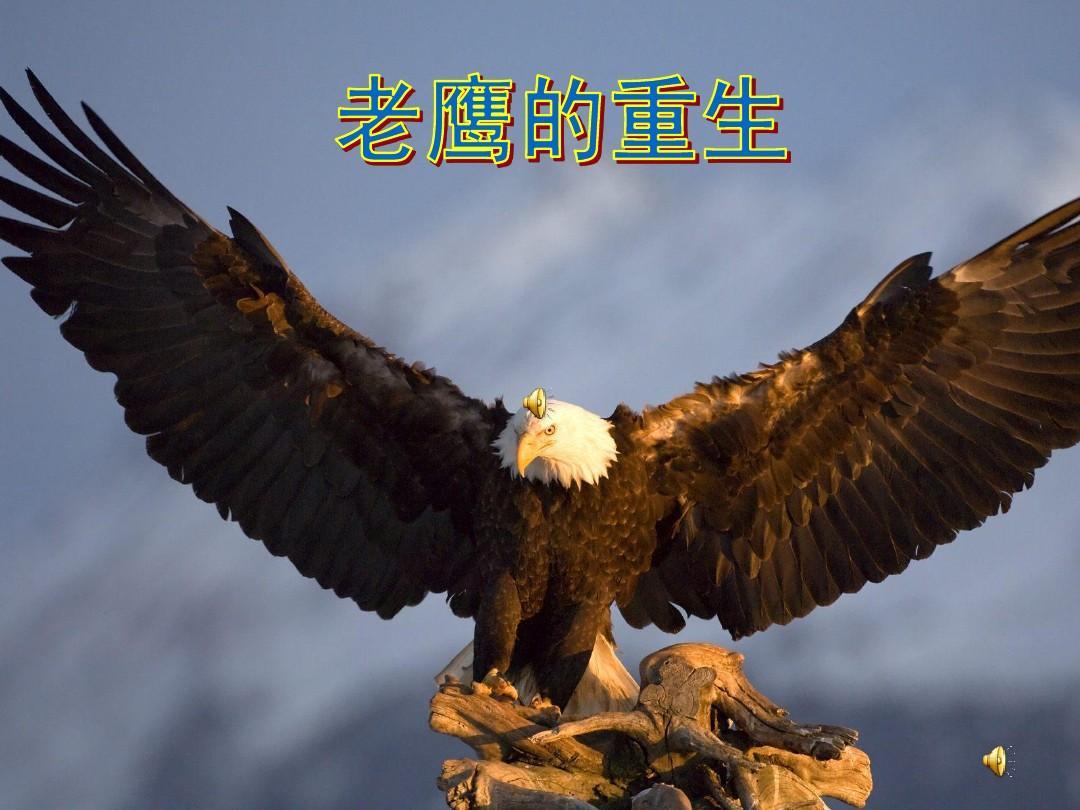 老鹰的重生appt
