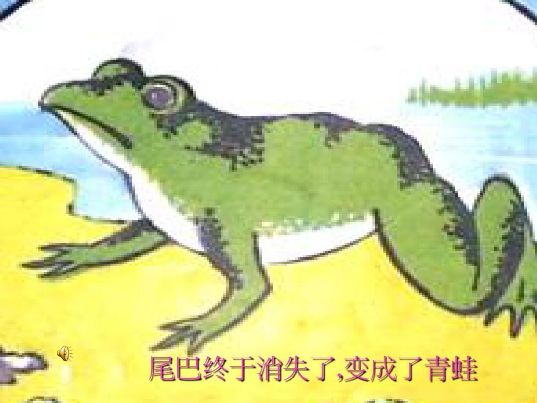 小蝌蚪变青蛙PPT图片