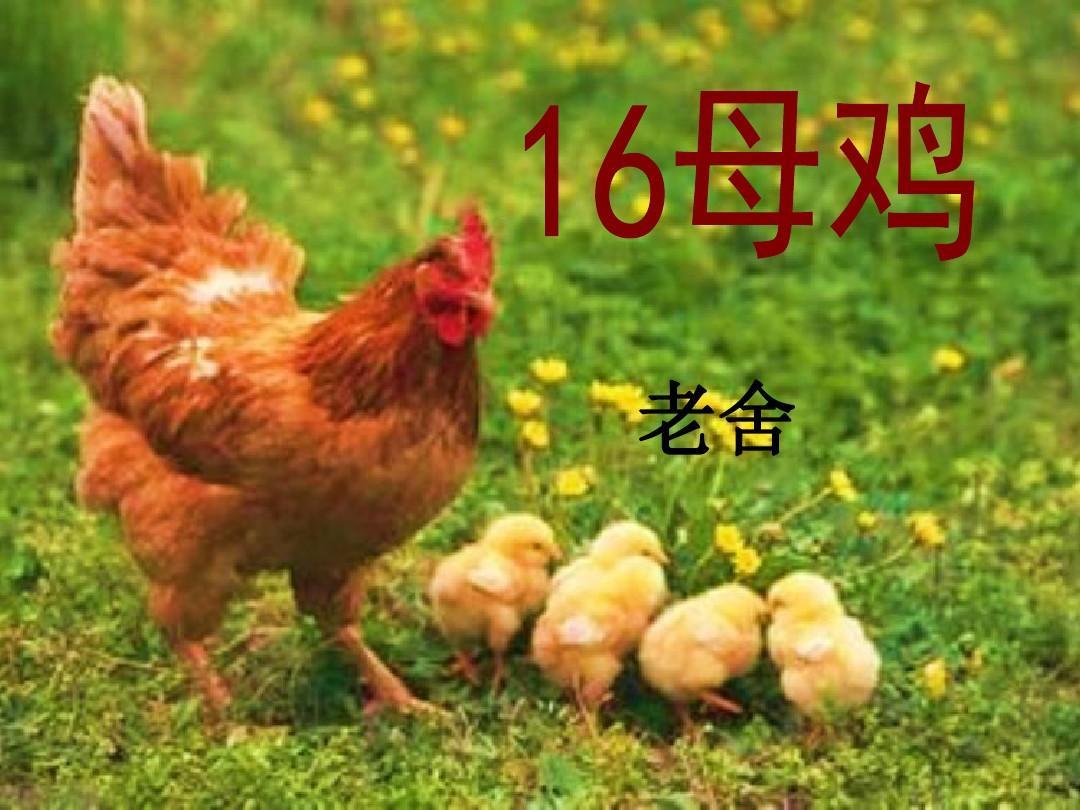 人教版四年级上册_此为人教版四年级上册16课《母鸡》,简洁大方.
