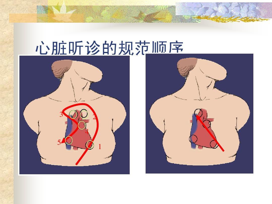 无忧文档 所有分类 医药卫生 基础医学 心脏查体ppt  精品 心脏听诊的