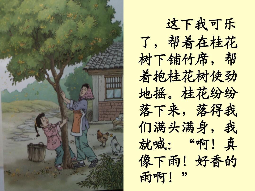 五年级上册语文桂花雨ppt