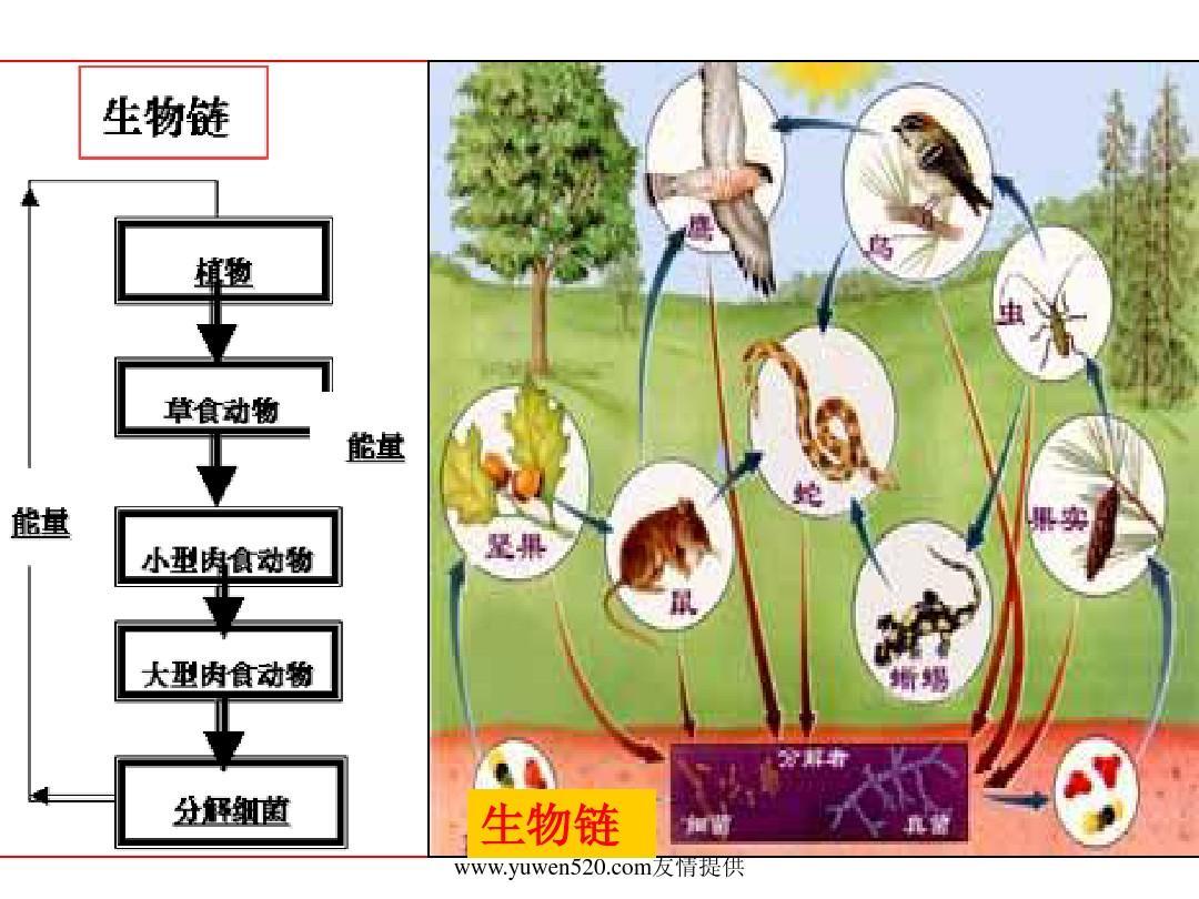 http://www.wendangwang.com/pic/7f0ef493da109ebe6a7f3279/1-1048-jpg_6_0_______-642-0-0-642.jpg_生物链 该课件由【语文公社】 http://www.wendangwang.com友情提供