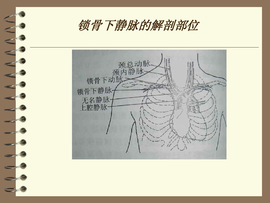 水电解质代谢紊乱 中心静脉穿刺置管术 中心静脉置管护理 锁骨下静脉