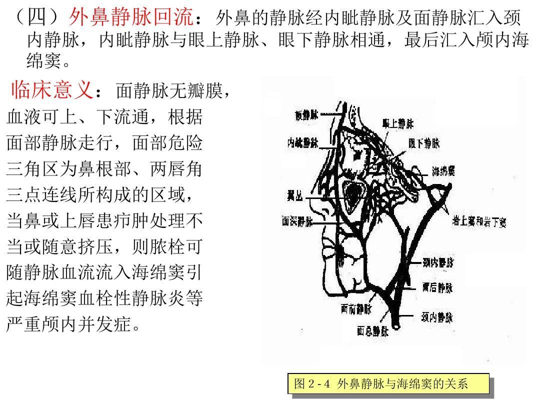 生理解剖学_鼻与鼻窦的应用解剖学与生理ppt