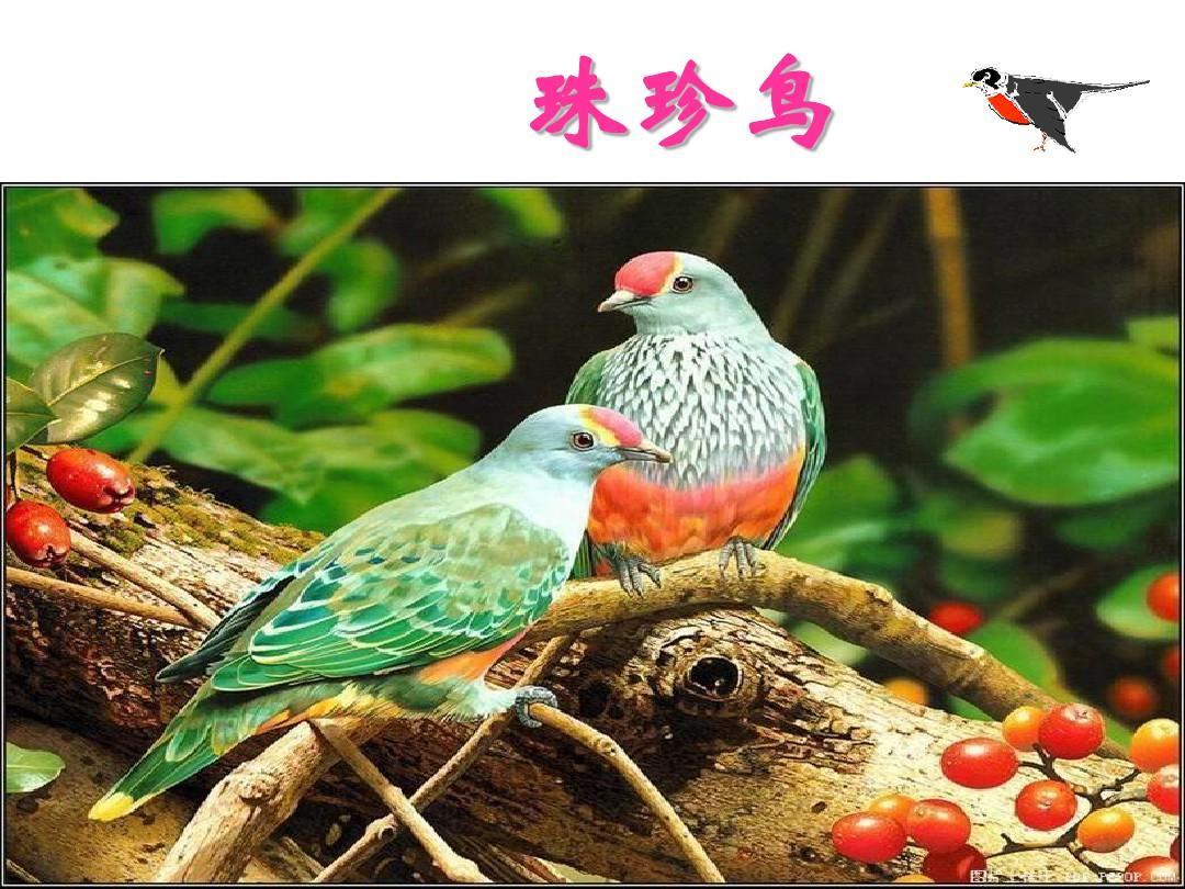 浙教版语文七上册年级第19课《珍珠鸟》ppt课认识图形说课稿小班图片