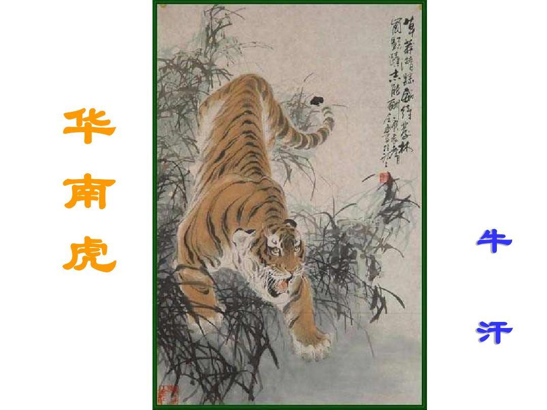 华南虎PPT红军(1)_word雪山在线阅读与下载_课件过草地爬文档教学设计图片