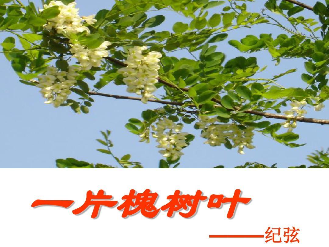6,现代诗两首(2) 一片槐树叶 (1课时)ppt