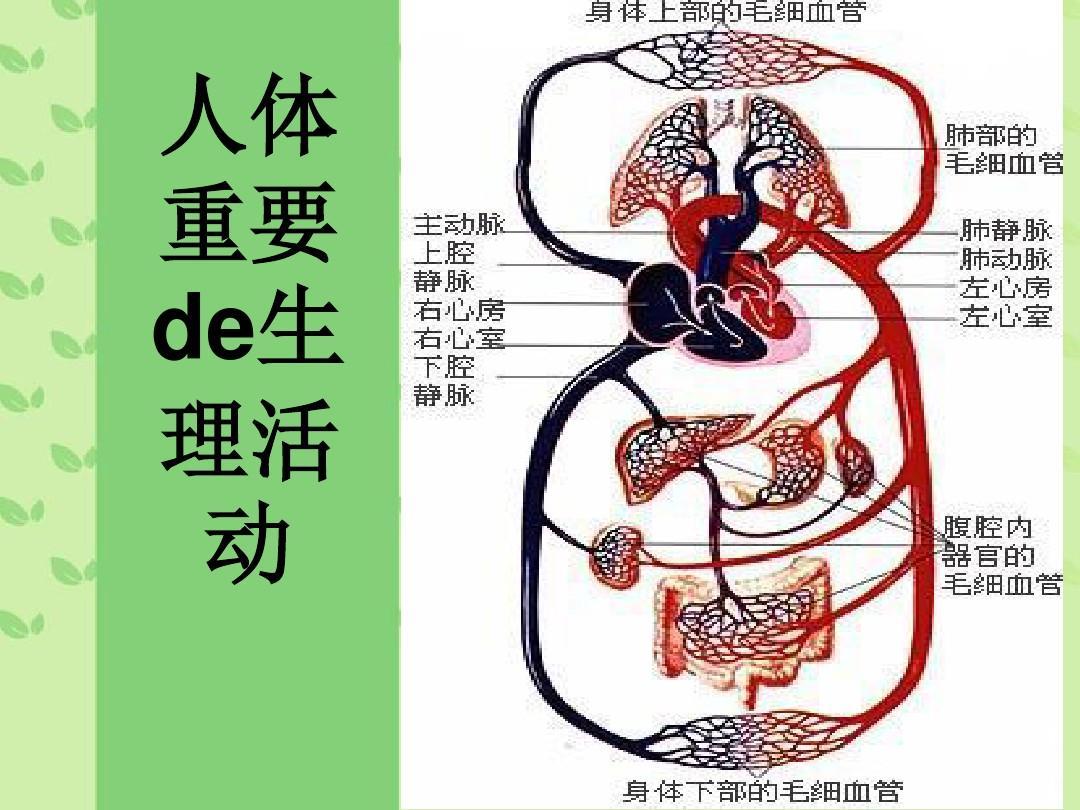 人体生理弯曲_人体重要的生理活动ppt