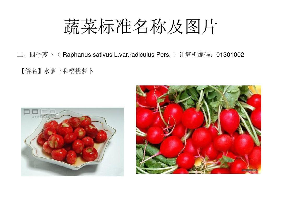 蔬菜标准名称及图片ppt