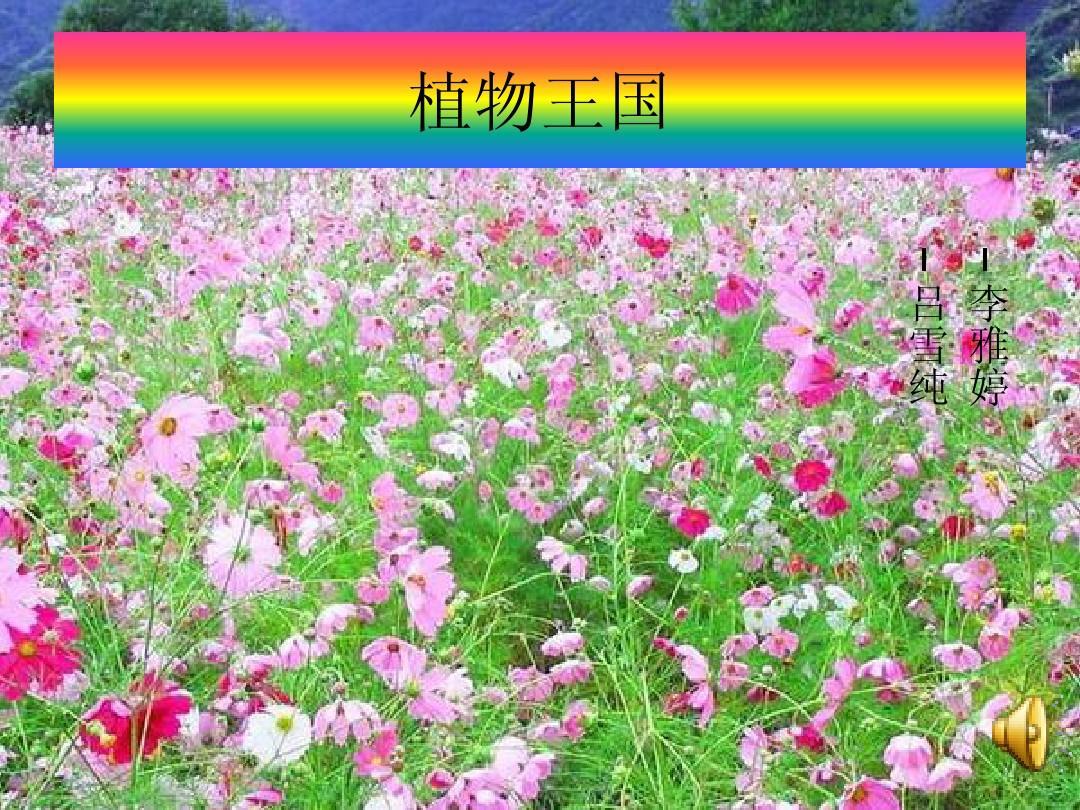 植物王国ppt图片
