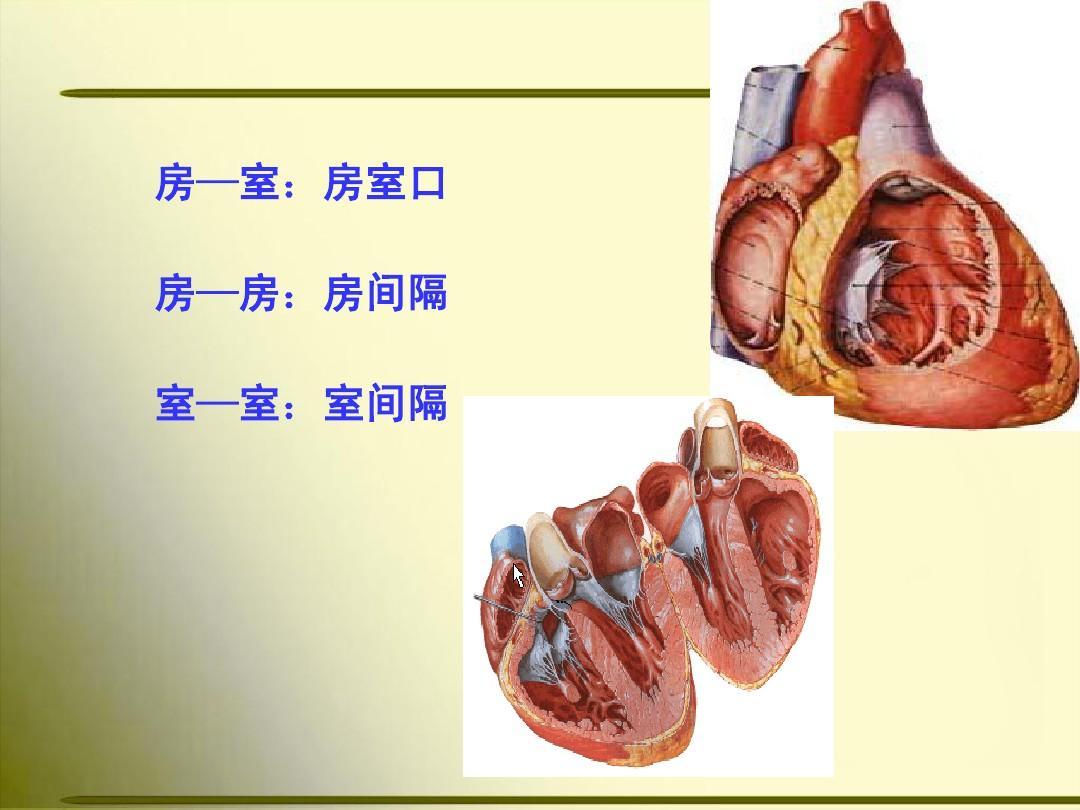 人体生理解剖学教材_据全国医学院校高职高专教材 《人体解剖学》第二版制作