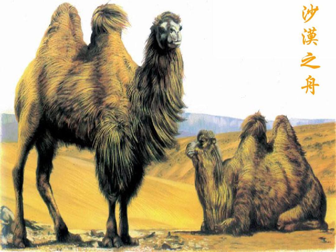 骆驼赋 (2)