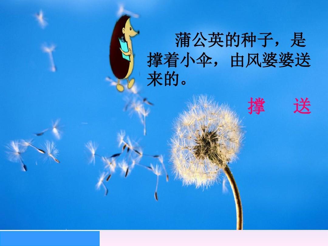 蒲公英的种子,是 撑着小伞,由风婆婆送 来的.图片