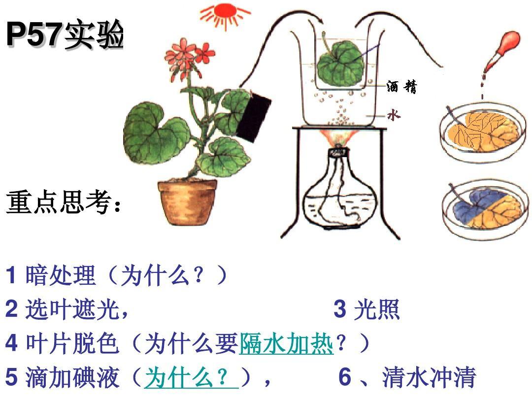 第8页(共42页,当前第8页)你可喜欢植物高一光合作用生物光合普通高中英语课程图片