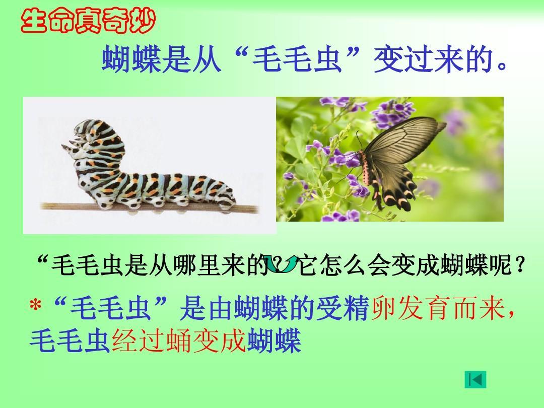 第二节_昆虫的生殖和发育1