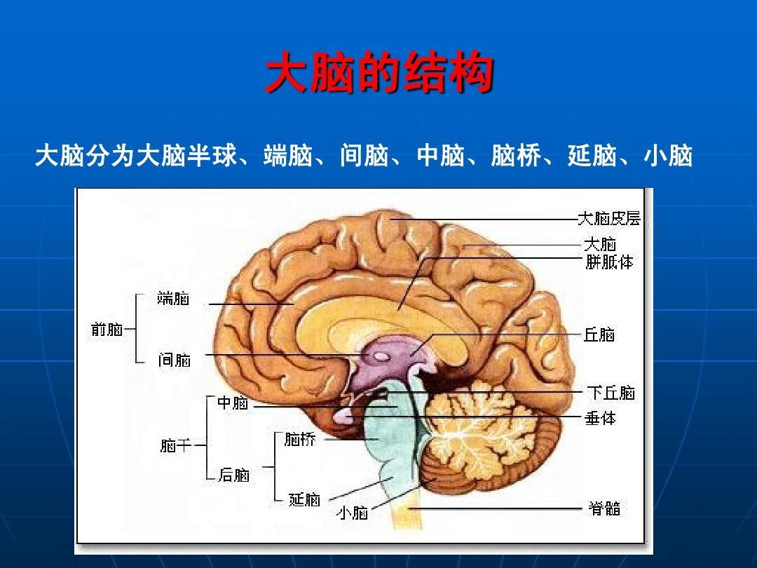 是怎么引起的?脑CT多普勒检查项目有哪些?