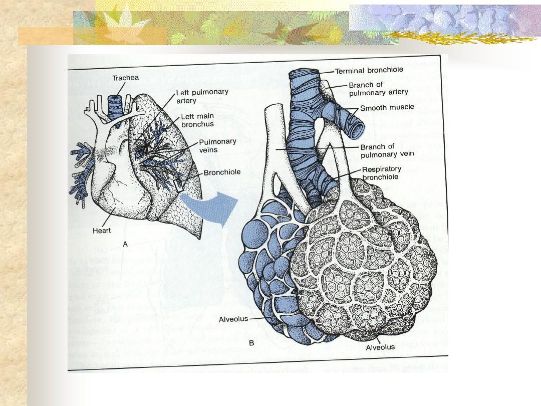 呼吸系统领域社会的v领域胸部ct解剖老年呼吸系统内科学呼吸系统幼儿园病人疾病教学设计步骤图片