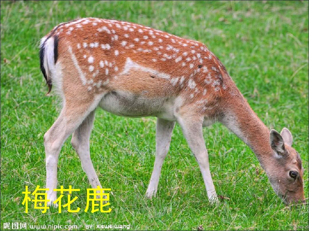 幼儿识物 动物图片大全(一)ppt