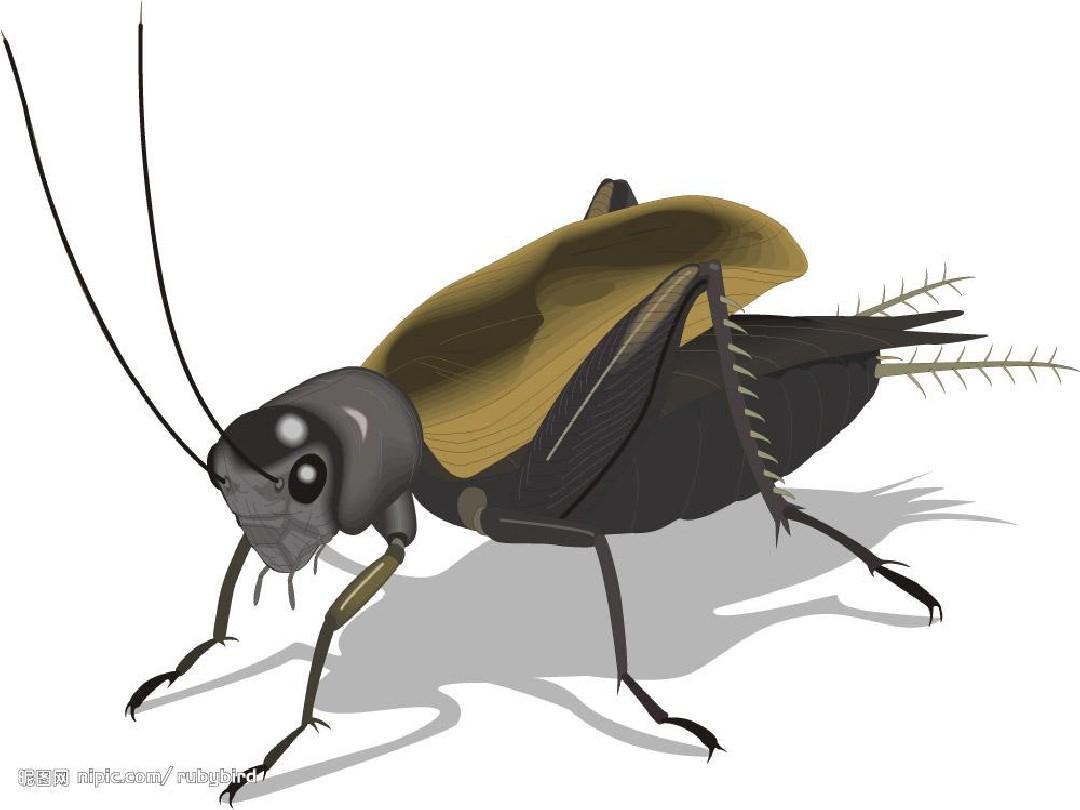 7《蟋蟀的住宅》ppt课件上课用